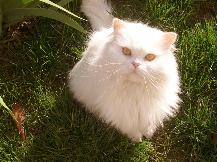 Cats-cats-7017645-1600-1200 (700x525, 575Kb)