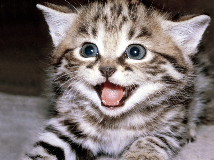 funny-cats-wallpaper-gallery-12 (700x525, 412Kb)