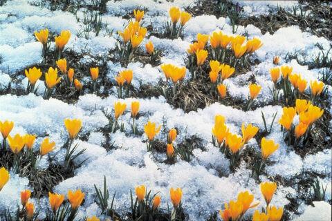 spring_12 (480x320, 67Kb)