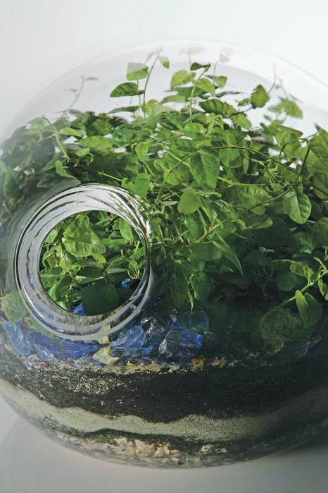 paula-hayes-detail-glass-terrarium (466x700, 461Kb)