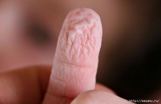 finger (550x356, 75Kb)