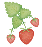 ������ dje_strawberries (634x700, 356Kb)