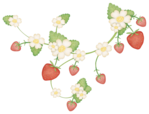 ������ dje_strawberry_vine (700x535, 223Kb)