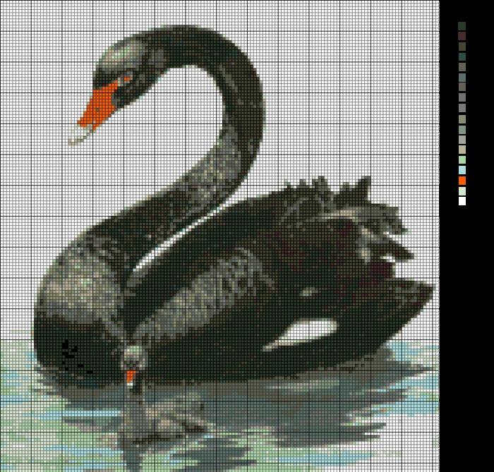 Название Черный лебедь