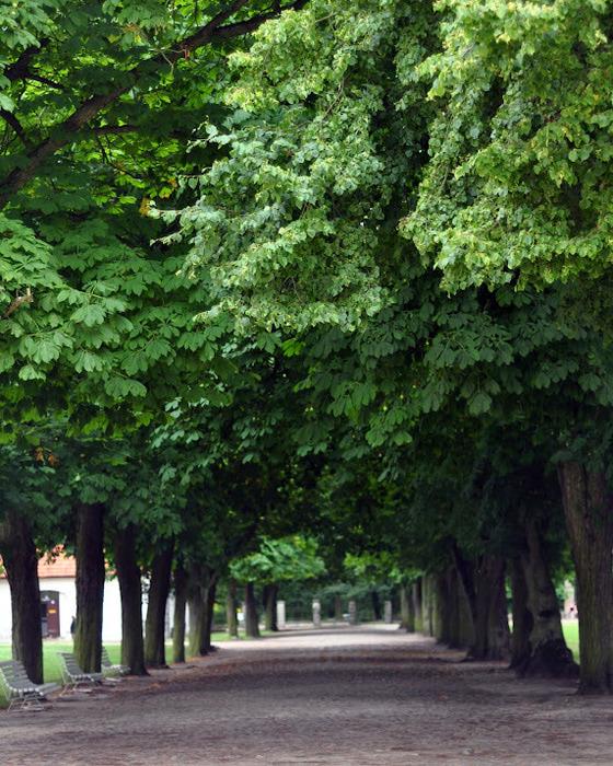 Дворец Рачиньских в селении Рогалин 99589