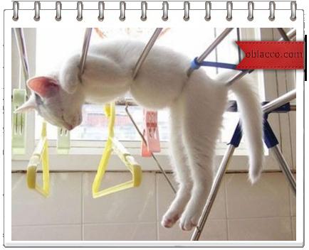 распорядок дня кошки/3518263_koshka (434x352, 196Kb)