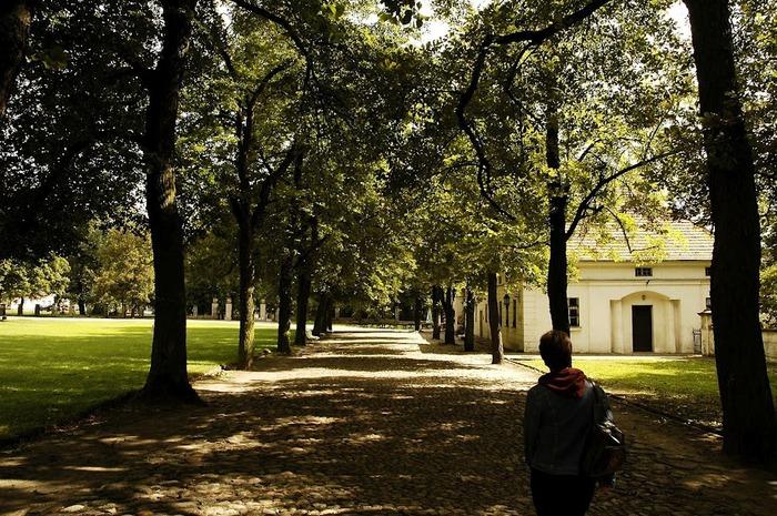 Дворец Рачиньских в селении Рогалин 74633