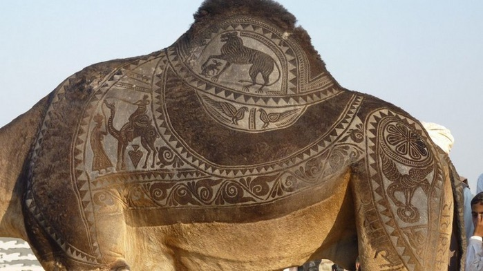 Фигурная стрижка верблюдов 1 (700x392, 85Kb)