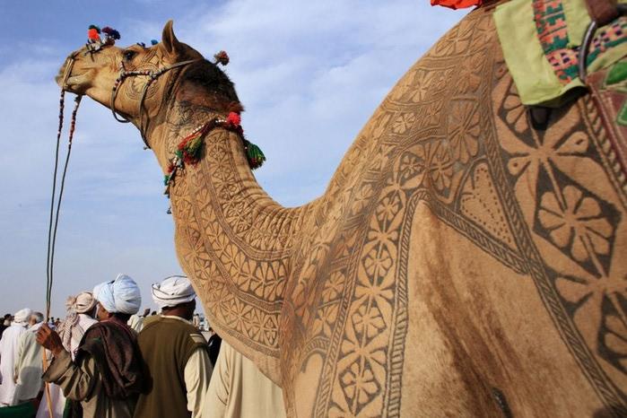 Фигурная стрижка верблюдов 5 (700x466, 104Kb)