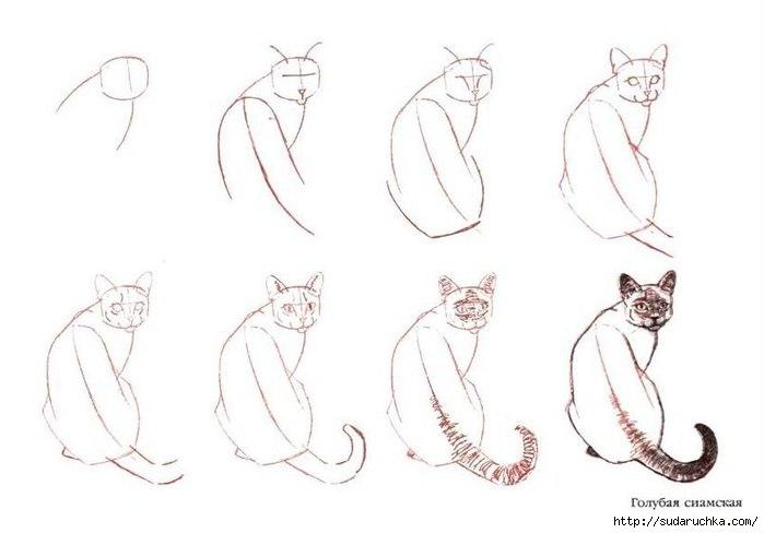 Учимся рисовать животных.