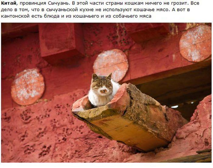 cat_01 (700x553, 70Kb)