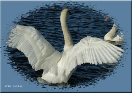 Лебеди-на-пруду (450x318, 203Kb)
