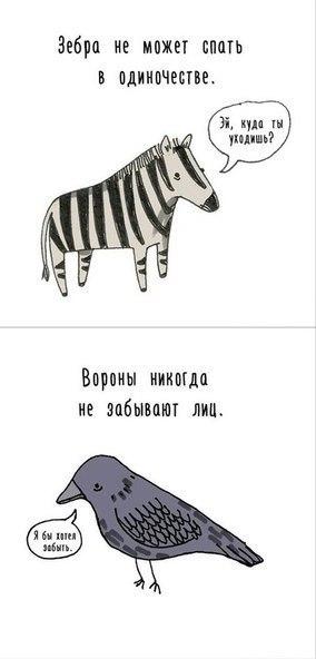 Факты о животных6 (284x592, 58Kb)