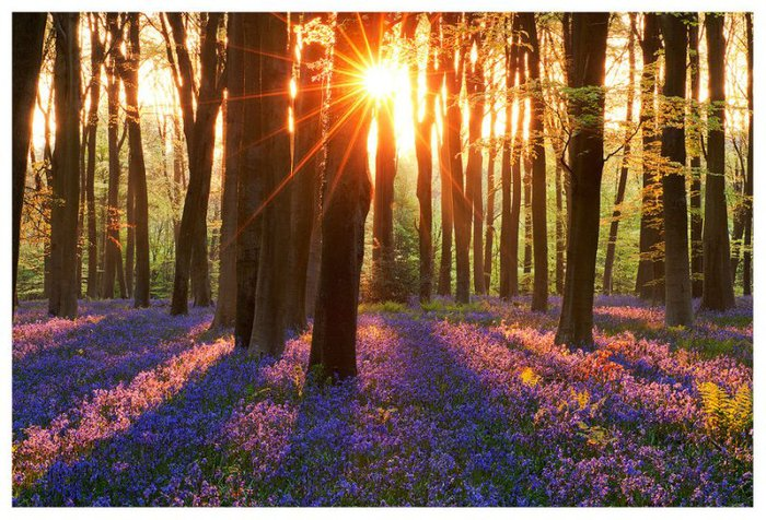 3303834_purple_spring_11 (700x476, 119Kb)