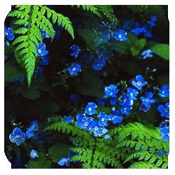 ава_в-лесной (250x250, 137Kb)