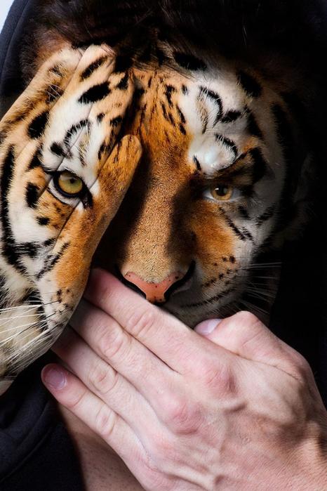 фотопроект Лица диких зверей 11 (466x700, 354Kb)
