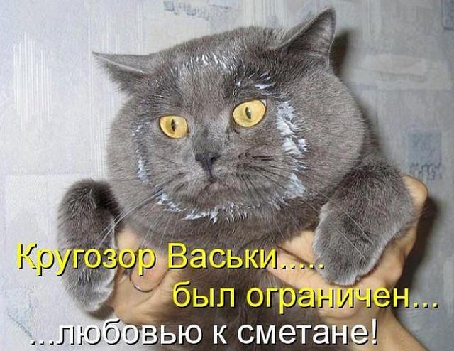 Кот и банка сметаны