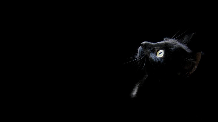black-cat-wallpaper-1366x768 (700x393, 13Kb)