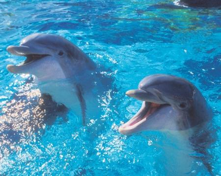 5864603_dolphins (450x360, 162Kb)