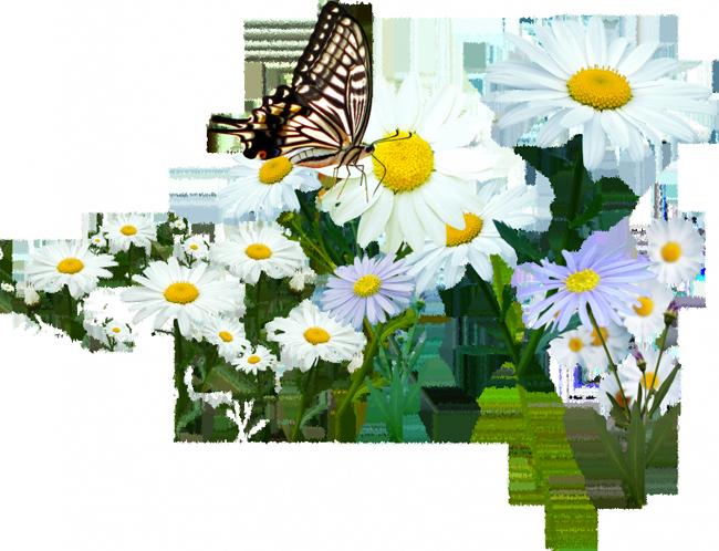 5230261_venetka_rom__bab_i_mn (650x498, 574Kb)