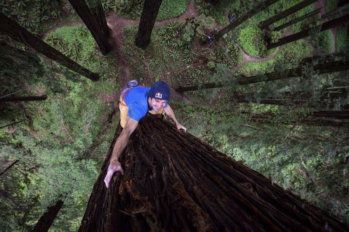альпинист Крис Шарма взбирается на секвойю 2 (700x466, 399Kb)