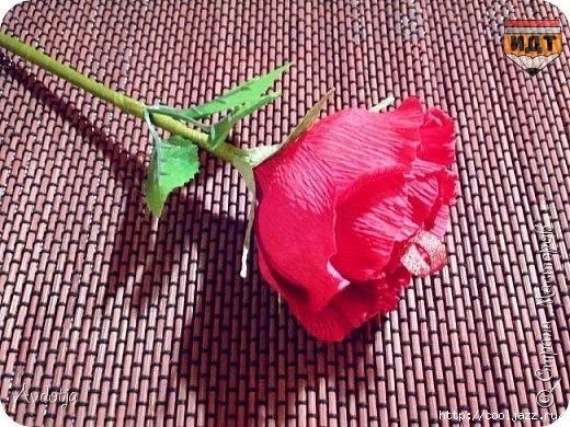 Роза с чупа чупсом8 (520x390, 206Kb)