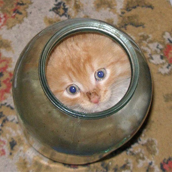 Жидкие коты2 (680x680, 329Kb)