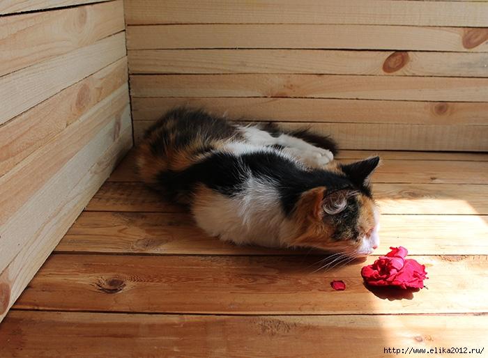 кошка с розой/4800487_12 (700x514, 245Kb)