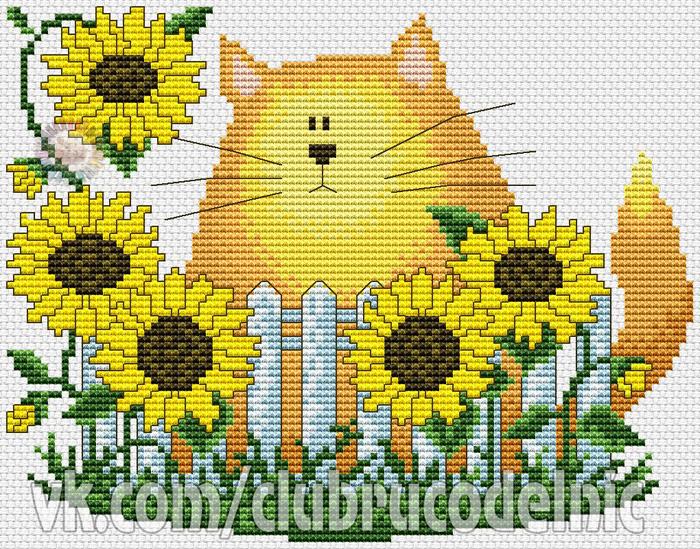 Подсолнечный кот (700x549, 669Kb)
