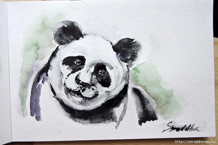 панда, акварель от Shraddha (0) (700x466, 252Kb)