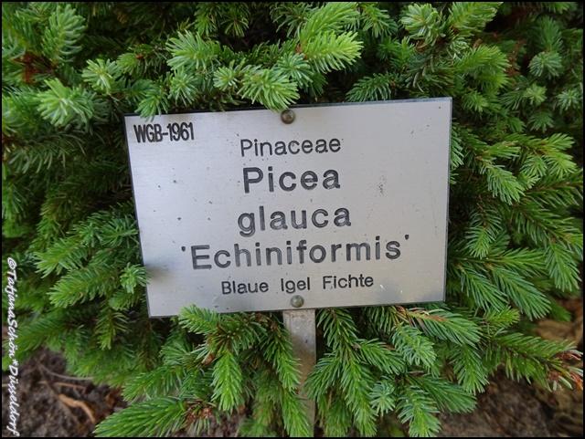 Дюссельдорф, ботанический сад