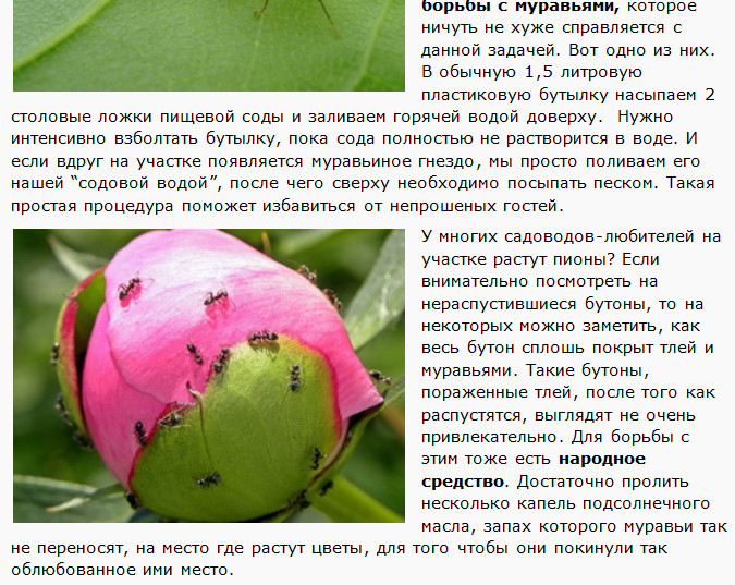 от Муравьёв. ()