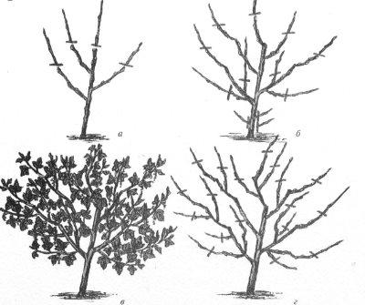 SmorodinaKras4 (400x335, 70Kb)