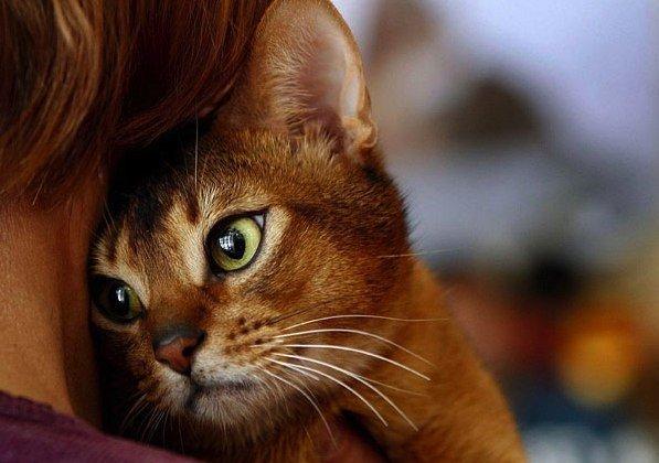 Почему кошка ложится на больное место человека (597x420, 48Kb)