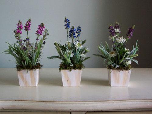 Как вырастить лаванду из семян в домашних условиях видео