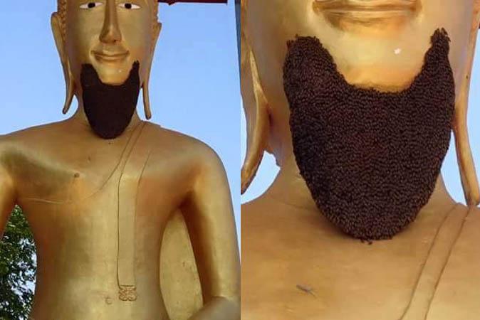 buddha_beard1 (674x450, 43Kb)