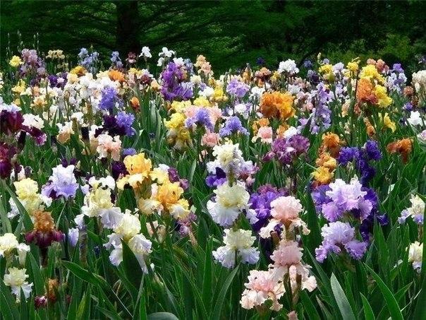 цветы (604x453, 365Kb)