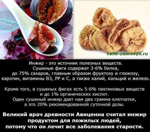Фига и ее полезные свойства/4501690_inzhirpoleznyesvojstva (500x441, 72Kb)