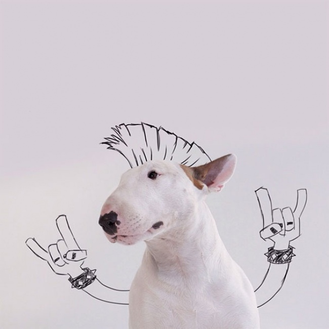 18194210-R3L8T8D-650-Jimmy-the-Bull-Terrier2__605 (650x650, 64Kb)