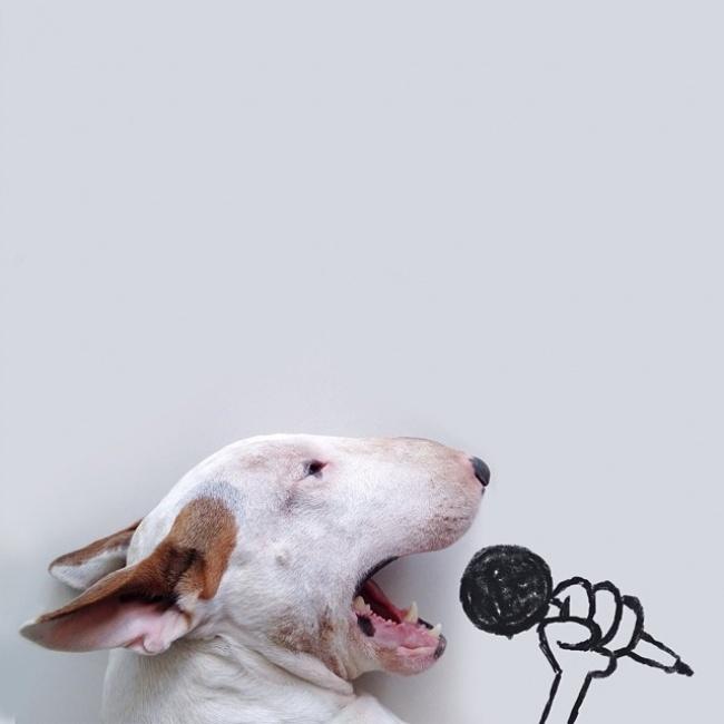 18193860-R3L8T8D-650-jimmy-choo-bull-terrier-illustrations-rafael-mantesso-1 (650x650, 62Kb)