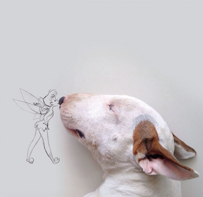 18193710-R3L8T8D-650-Jimmy-the-Bull-Terrier1__605 (650x629, 66Kb)