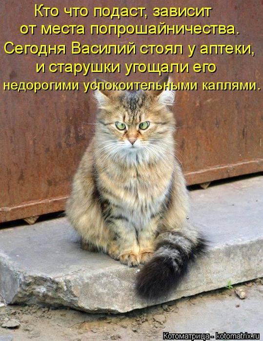 1436475063_05 (539x700, 464Kb)