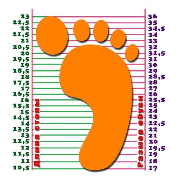 См длина стопы какой размер обуви