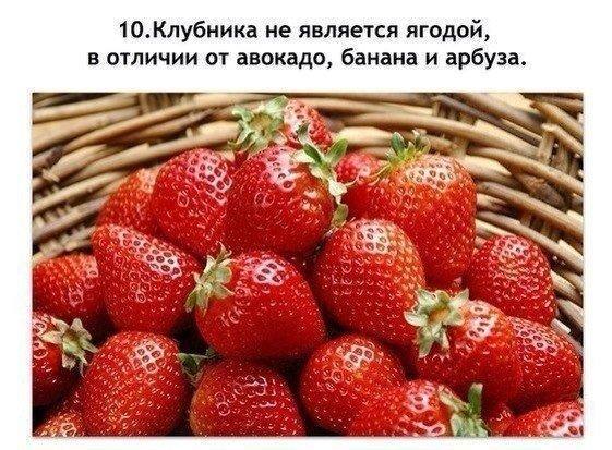 10 фактов9 (561x413, 316Kb)