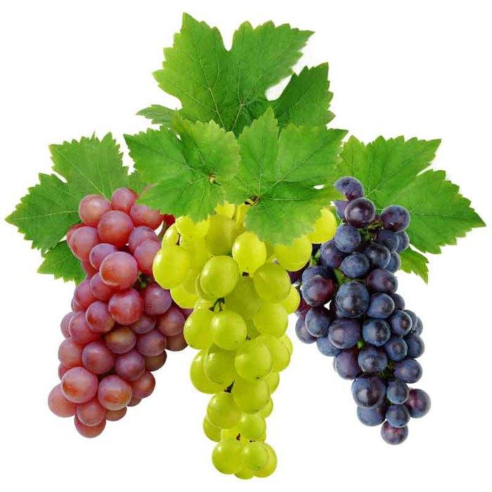 grape (700x700, 71Kb)