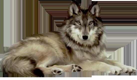 волчица (550x320, 291Kb)