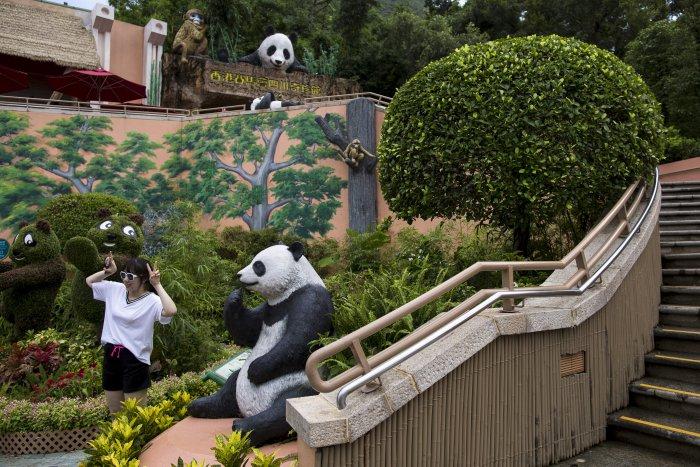 цзя цзя панда долгожительница 6 (700x467, 397Kb)