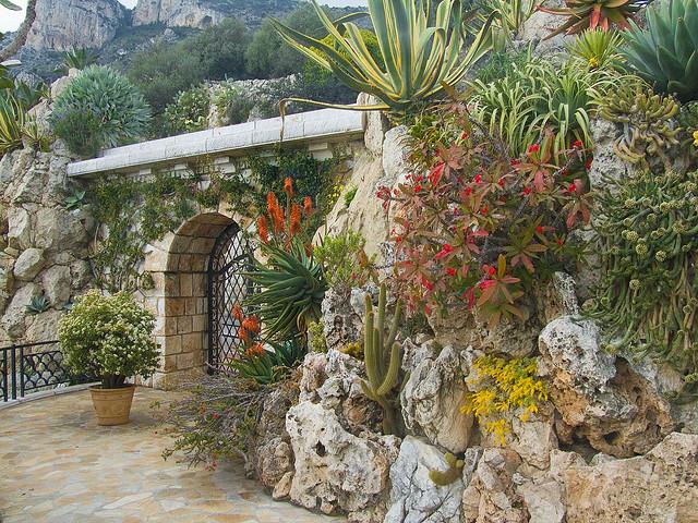 Jardin-Exotique-de-Monaco-Exotic-Gardens (640x480, 504Kb)