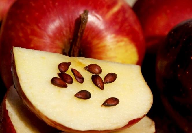 яблочные (664x460, 240Kb)