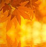 Превью 1269528122_autumn_leaves-big3 (601x605, 256Kb)